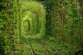 """Many of us imagine Ukraine as a disturbed post Soviet nation. But after checking out the beauties of the country including """"The Tunnel of Love"""",. Minds have to change"""
